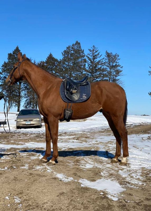 Sweet Platinum dressage saddle