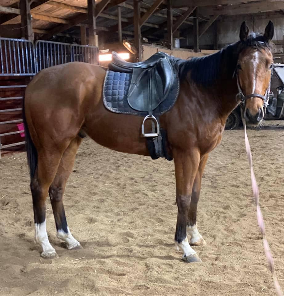 Too Many Shoes in dressage saddle